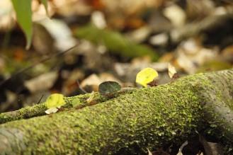 Under bladen jäktar flitiga myror